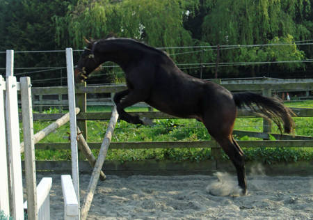 Nibs freeschooling over a fence