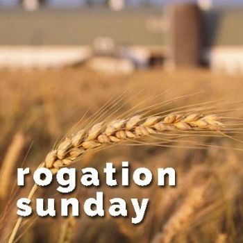 rogation-sunday