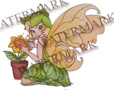 Vinca - The Fairy