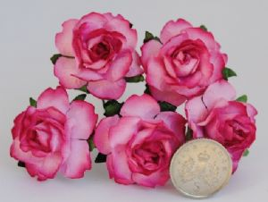 2tone CERISE PINK Floribunda Roses 25mm