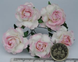 2tone LIGHT ROSY BABY PINK Floribunda Roses  25mm