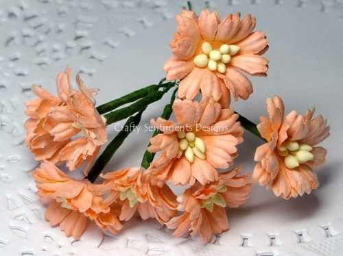 PEACH COSMOS DAISY STEM FLOWERS (pack of 10)