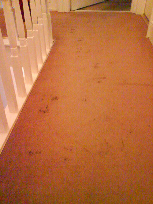 Dirty Carpet Before 4
