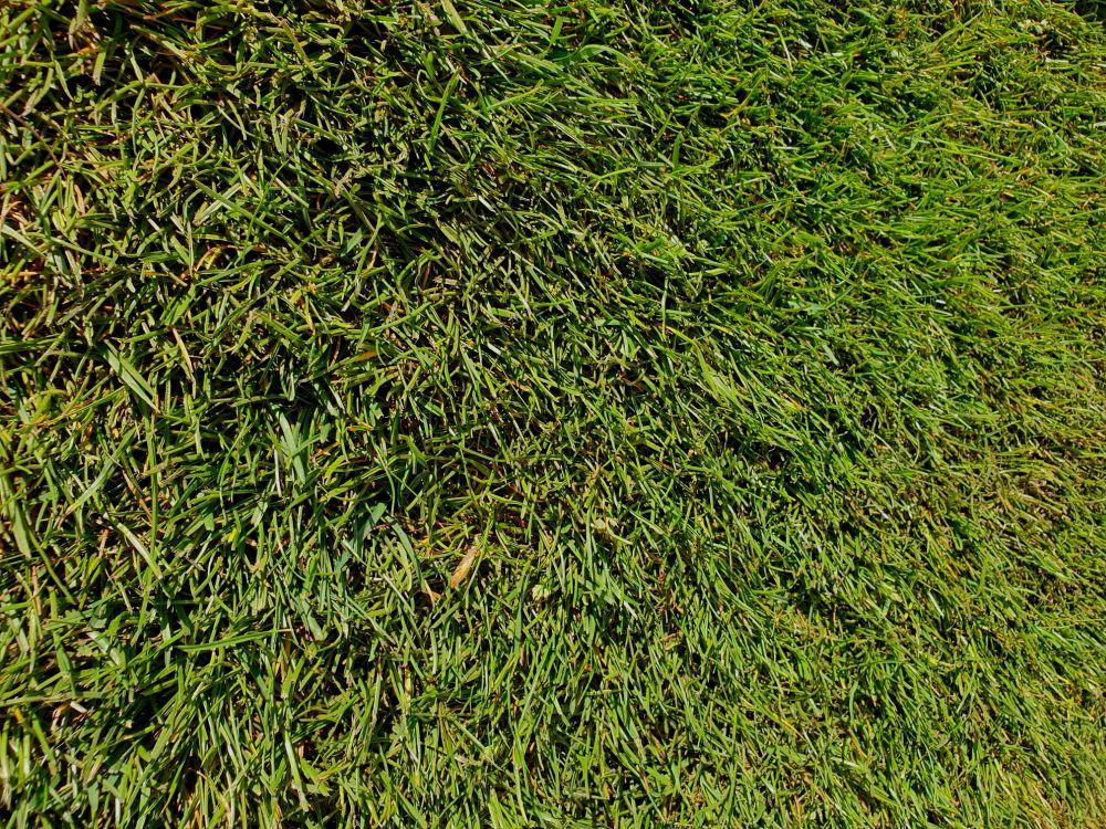 Tudor General Purpose Lawn Turf