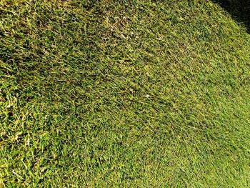 Tudor LT4 Fine turf