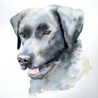 Watercolour Pet Portrait