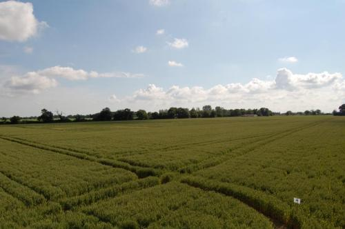 agrivice trials this season will look at fungicide activity in wheat progra