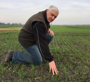 Alex WIlcox in WInter Wheat Dec 2016