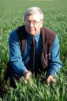 Dave Ellerton Wheat