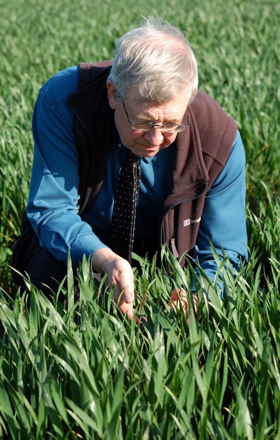 Dr Dave Ellerton advanced wheat growth stages