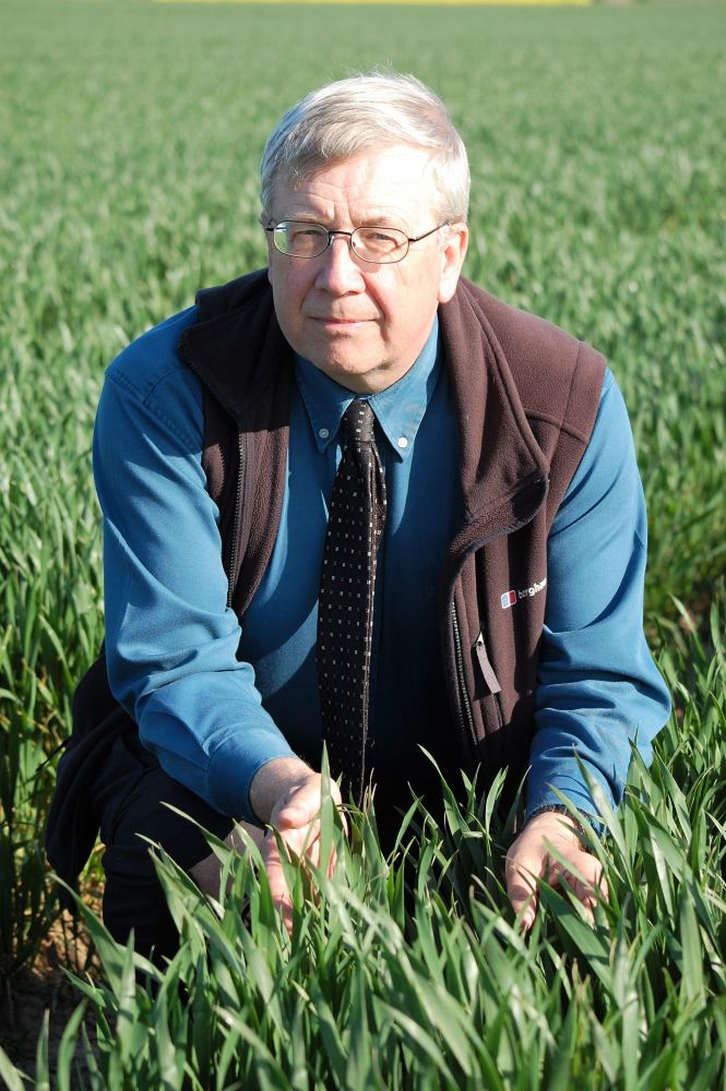 Dr Dave Ellerton Wheat