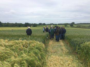 Looking at variety trials in Carlise