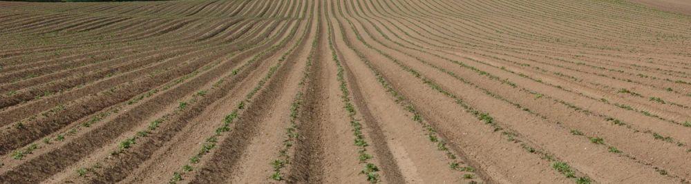 Potatoes-emerging-pretty-pic-1500x400 CPM Diquat Article