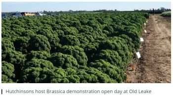 Old Leake Brassica Open Day - Farm Business