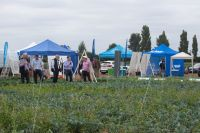 Brassica Demo day