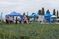 Brassica Demo day