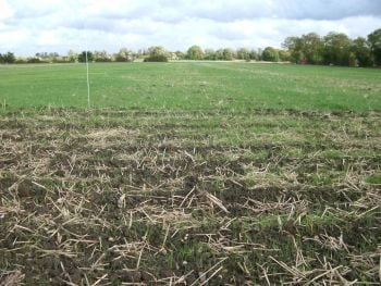 Black-grass will most likely have mixed dormancy this seasonjpg
