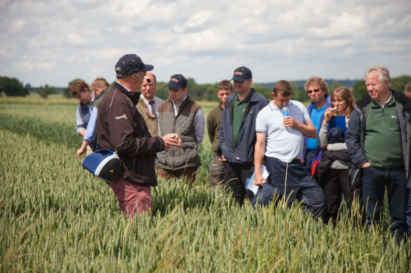 brampton cultivations discussion
