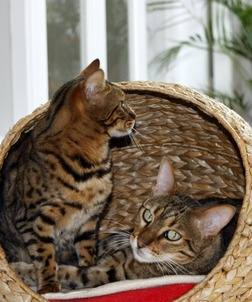 Cats_July11_4