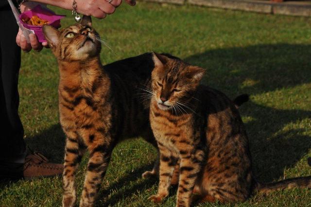 Cats June 11 016