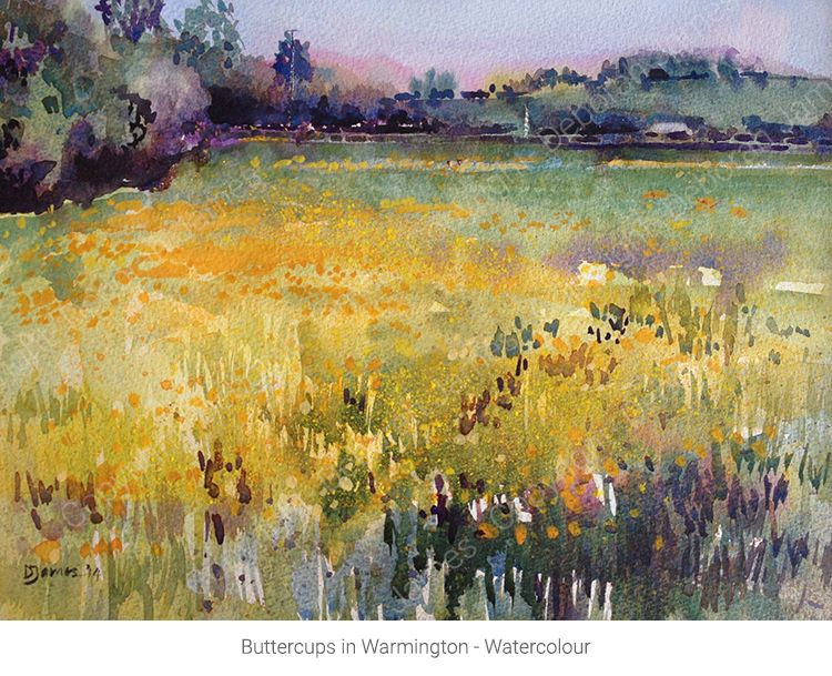 Buttercups in Warmington - Watercolour