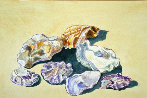 Seven Shells
