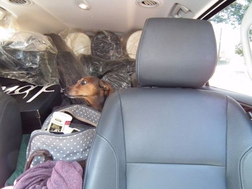 delivery - one set in Nissan SUV with dog and luggage