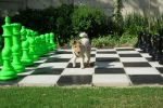 lime green and black chess set and dog