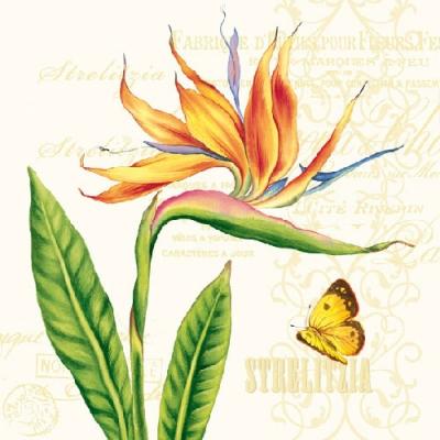 Strelitzia Cream. 33 cm x 33 cm