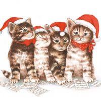 Singing Cats - 33304765