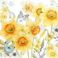 Classic Daffodils - 12512690