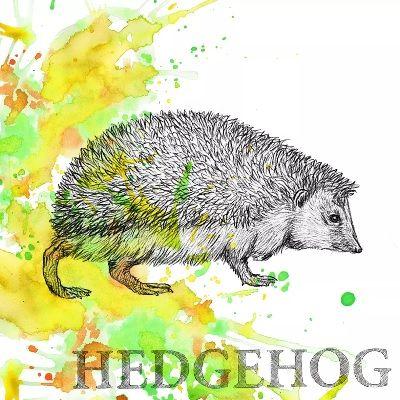 Autum Hedgehog - 3332513