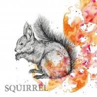 Autumn Squirrel - 3332514
