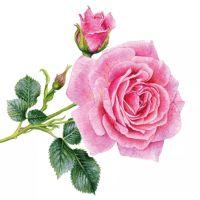 Rosedal - 1253740