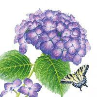 Hydrangea & Butterfly - 1253741