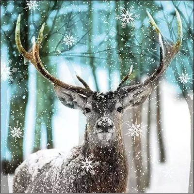 Winter Deer - 12513765