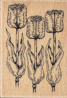 HH1144F - Tulips