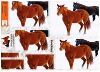 LF8008 - Pyramid Decoupage - Snow Horses