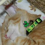 Maggie - Shamrocks cat collar