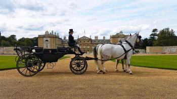 wedding landau with white horses