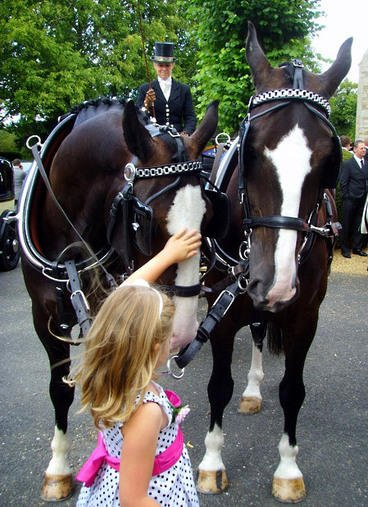 Wedding-horses&child
