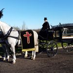 funeral white horse black hearse
