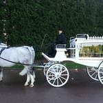 Funerals-White horse drawn hearse