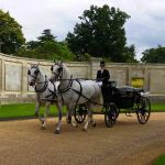 white horses and wedding carriage
