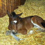 At home-Newborn foal