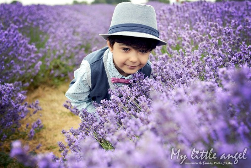 mayfield lavender banstead_zz02
