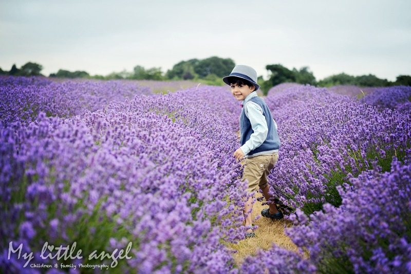 mayfield lavender banstead_zz03