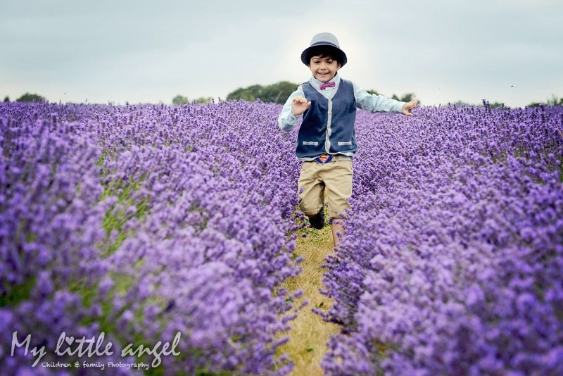 mayfield lavender banstead_zz04
