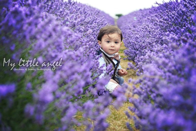 mayfield lavender banstead_zz06