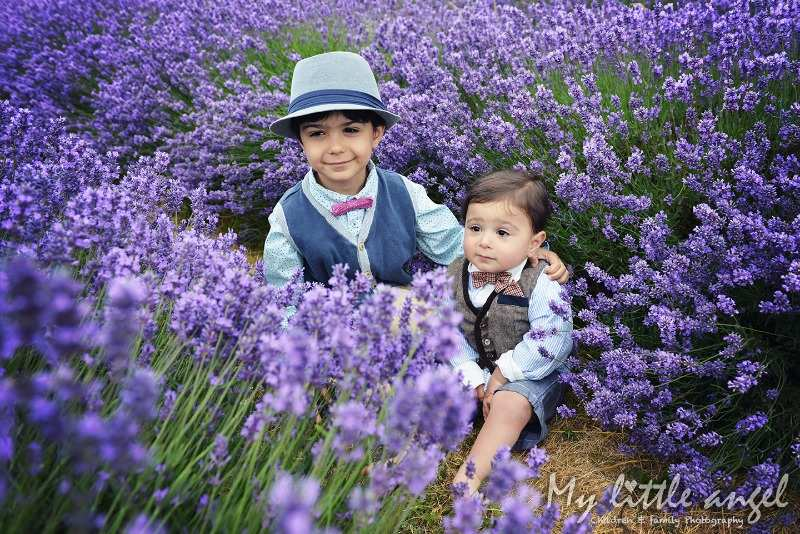 mayfield lavender banstead_zz08